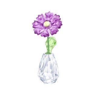 5439225 Figurka SWAROVSKI FLOWER DREAMS GERBERA